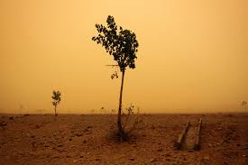desertification essay