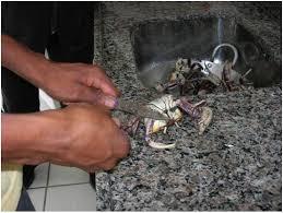 Resultado de imagem para imagens de receitas de PEIXE BARBADO