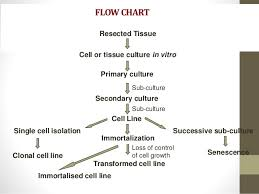 Flowsheet Of The Process Applied In Cloning Science