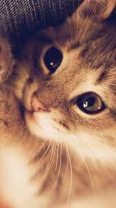 Cute kittens, Tekir kediler ...
