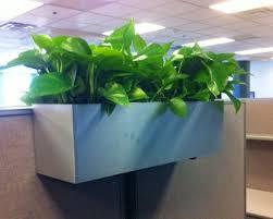 office cubicle plants. interesting plants topsiders on cubicles thoratec corporation burlington ma  pdi office  plant design to cubicle plants