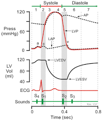 Cv Physiology Heart Sounds