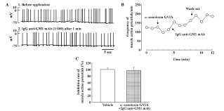 effects of pretreatment with the n type calcium channel blocker ω conotoxin gvia on the inhibitory effect of igg anti gm1 mab 1 100 on spontaneous