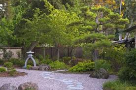 japanese garden with gravels and japanese black pine tree