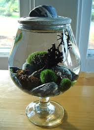zen garden stone top marimo ball unique terrarium by myzen on i have this minus the top