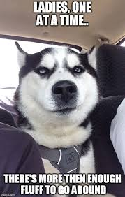 Huskies:. ♥ on Pinterest | Siberian Huskies, Husky and Siberian ... via Relatably.com