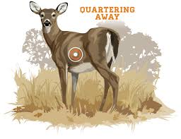 Whitetail Deer Size Chart Bowhunting How To Where To Aim On A Whitetail Deer