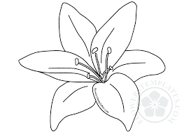 Flowers Templates Lily Flower Template Calla Paper Pattern