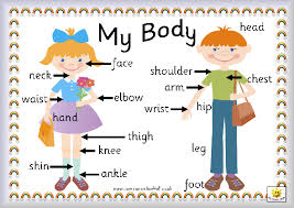 Image result for label the human bods ks1