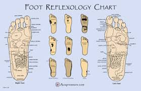 Free Printable Reflexology Charts Acupressure
