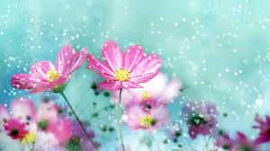 HD Flower Desktop Wallpaper ...