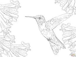 Small Picture Realistic Ruby Throated Hummingbird coloring page Free Printable