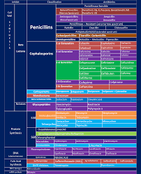 Antibiotic Chart Antibiotic Specifications Chart Based On Mode Of Action