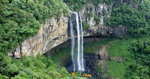 The largest rainforests are in the amazon in brazil (south america), demographic republic of congo (africa). What Is A Tropical Rainforest Definition Location Pictures And Facts