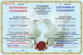 Шуточный диплом для свадьбы Присяга невесты Дипломы календари   Шуточный диплом 2 половинки