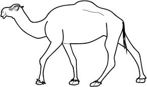 Small Picture Picture of Camel Coloring Page Download Print Online Coloring