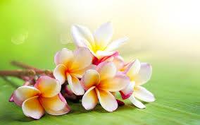 flower hd widescreen for desktop 1080p