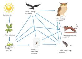 desert food web diagram food web facts science trek   chainimagedesert food web diagram food web facts science trek