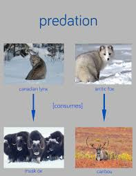 essay on predation components effects
