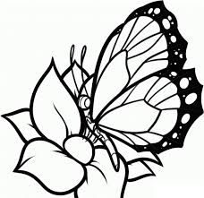 Small Picture Beautiful Coloring Pages Butterfly Kids Pictures New Printable