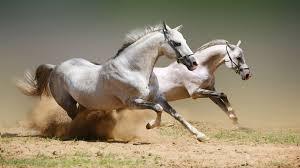 Horse Wallpaper Desktop Animal 210564