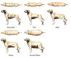 Overweight Dog Problems Goldenacresdogs Com