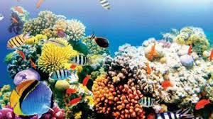 Coral Reef In India Off Goas Coast Indias Hidden Coral Gem