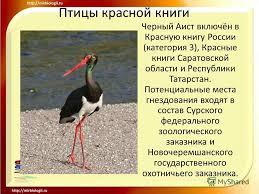 Презентация на тему Птицы красной книги Розовый пеликан Птицы  Птицы красной книги Черный Аист 12 Птицы