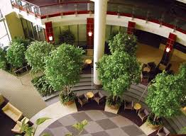 interior landscaping office. Interior Landscape Design. Love How The Trees Are In A Circle. Landscaping Office