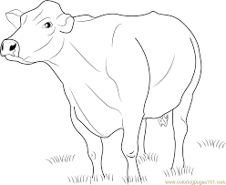 Small Picture Jersey Dairy Cattle Coloring Page Free Cow Coloring Pages