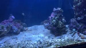 yes you can remove scratches from glass aquariums