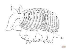 Small Picture Armadilo coloring page Free Printable Coloring Pages