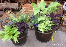Fernlea Flowers Ltd  Container GardeningContainer Garden Ideas For Shade