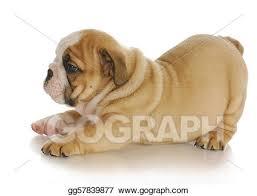 bulldog puppy drawing.  Puppy Bulldog Puppy Inside Bulldog Puppy Drawing T