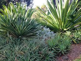 Small Picture Designing with Succulents Janna Schreier Garden Design