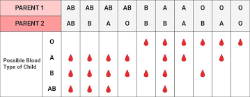 Baby Blood Type Chart What Is The Most Common Blood Type