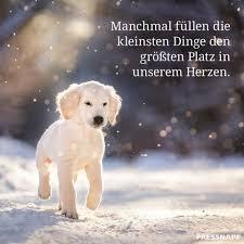Pin Von Pullup Auf Schöne Sprüche Hunde Hundesprüche Und Sprüche