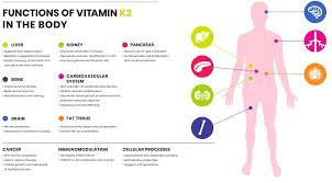 K2 Diet Chart Vitamin K1 And Vitamin K2 Importance To Health Feb 2019