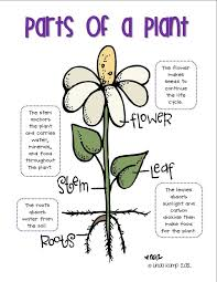 133 best Science ~ Plants and water cycle images on Pinterest ...