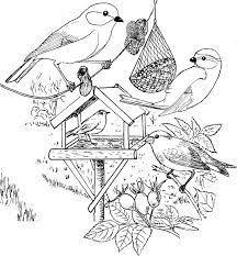 Afbeeldingsresultaat Voor Ijsvogel Kleurplaat Coloring