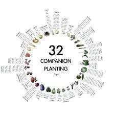 Companion Planting Chart Uk Companion Garden Layout Servipro Online