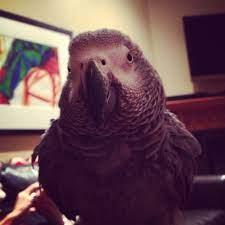 Margo bird   Bird, Parrot, Animals