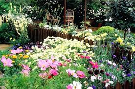perennial cutting garden the best flowers