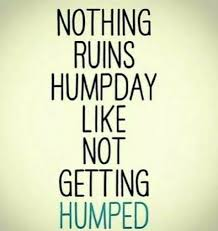 Happy Hump Day Quotes Adorable Hump Day Images Hump Day Images Pinterest Humor Funny Quotes