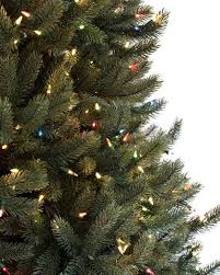 ... Vermont White Spruce Tree-7 ...
