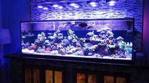 fish tank lighting ideas. Saltwater Fish Tank Lights Lighting Ideas