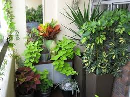 balcony garden. Balcony Gardens Tend To Consist Of Collections Small Potted Plants, Each Which Has Its Own Maintenance Needs. Jenny\u0027s Garden (above) Is A Lovely