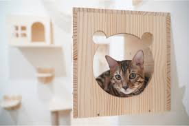 17 best cat shelves and wall perches