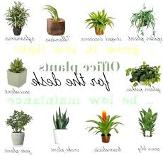 office plants no light. Good Office Plants S Best No Sunlight Low Light That Do Not Need Sun Bes . With Flowers T