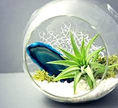 air plant terrariums minimalist air plant terrarium ideas air plant terrarium whole makerskit diy air plant air plant